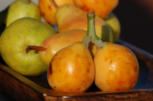 what does a loquat taste like and how to eat a loquat